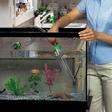 Aquarium Husbandry