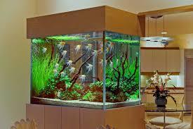 best marine aquarium