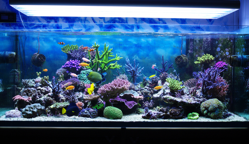 Choosing the Right Aquarium
