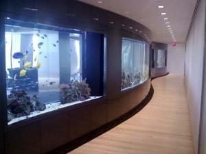 custom fish tanks